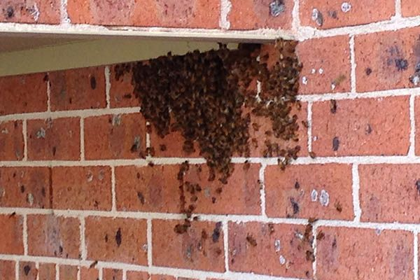 Safe Bee Removal Services in Nairobi